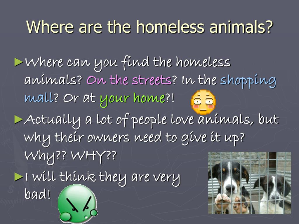 Where are the homeless animals?