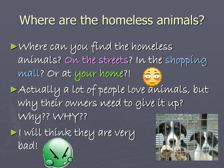 Where are the homeless animals