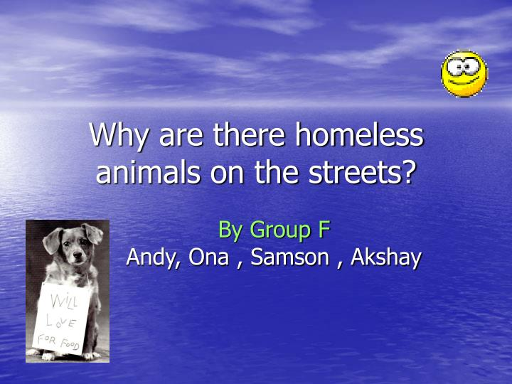Why are there homeless animals on the streets
