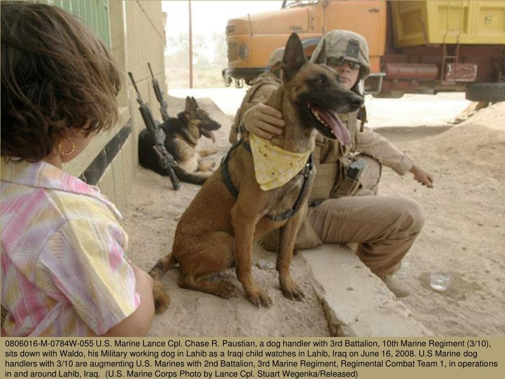0806016-M-0784W-055 U.S. Marine Lance Cpl. Chase R. Paustian, a dog handler with 3rd Battalion, 10th Marine Regiment (3/10), sits down with Waldo, his Military working dog in Lahib as a Iraqi child watches in Lahib, Iraq on June 16, 2008. U.S Marine dog handlers with 3/10 are augmenting U.S. Marines with 2nd Battalion, 3rd Marine Regiment, Regimental Combat Team 1, in operations in and around Lahib, Iraq.  (U.S. Marine Corps Photo by Lance Cpl. Stuart Wegenka/Released)