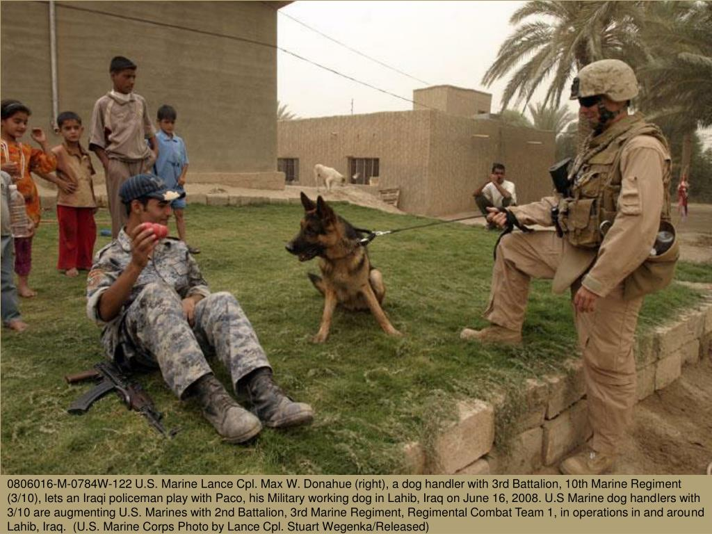 0806016-M-0784W-122 U.S. Marine Lance Cpl. Max W. Donahue (right), a dog handler with 3rd Battalion, 10th Marine Regiment (3/10), lets an Iraqi policeman play with Paco, his Military working dog in Lahib, Iraq on June 16, 2008. U.S Marine dog handlers with 3/10 are augmenting U.S. Marines with 2nd Battalion, 3rd Marine Regiment, Regimental Combat Team 1, in operations in and around Lahib, Iraq.  (U.S. Marine Corps Photo by Lance Cpl. Stuart Wegenka/Released)