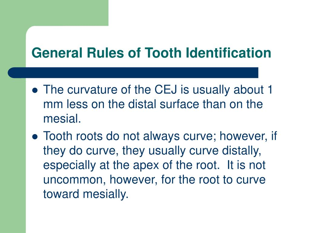General Rules of Tooth Identification