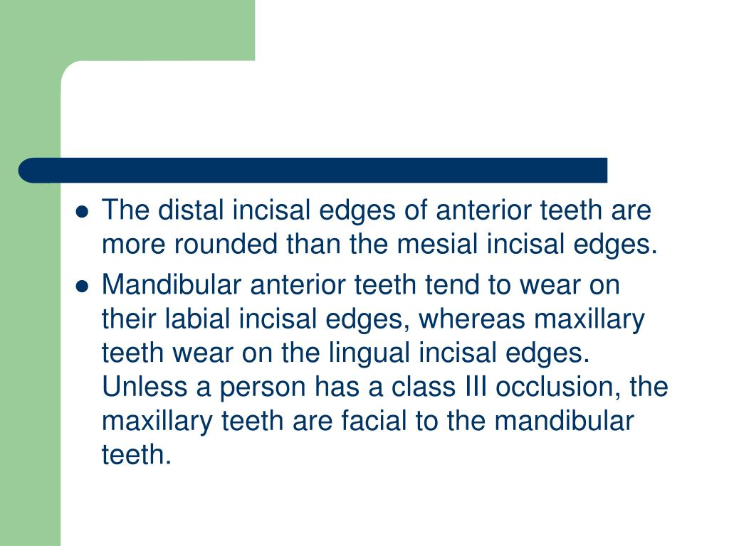 The distal incisal edges of anterior teeth are more rounded than the mesial incisal edges.