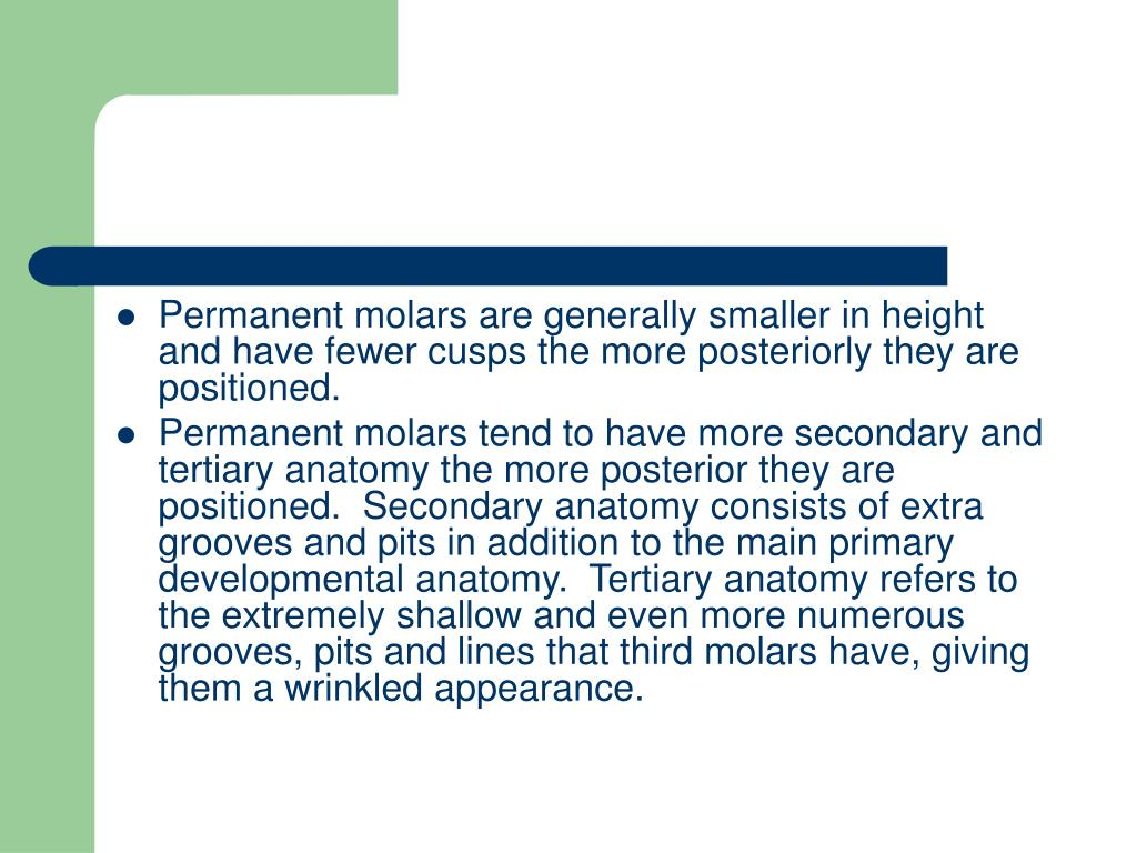 Permanent molars are generally smaller in height and have fewer cusps the more posteriorly they are positioned.