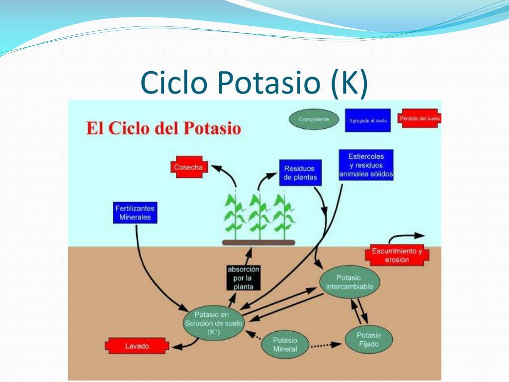Ciclo Potasio (K)