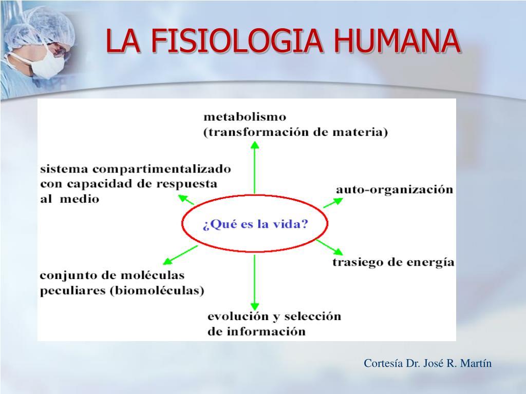 LA FISIOLOGIA HUMANA