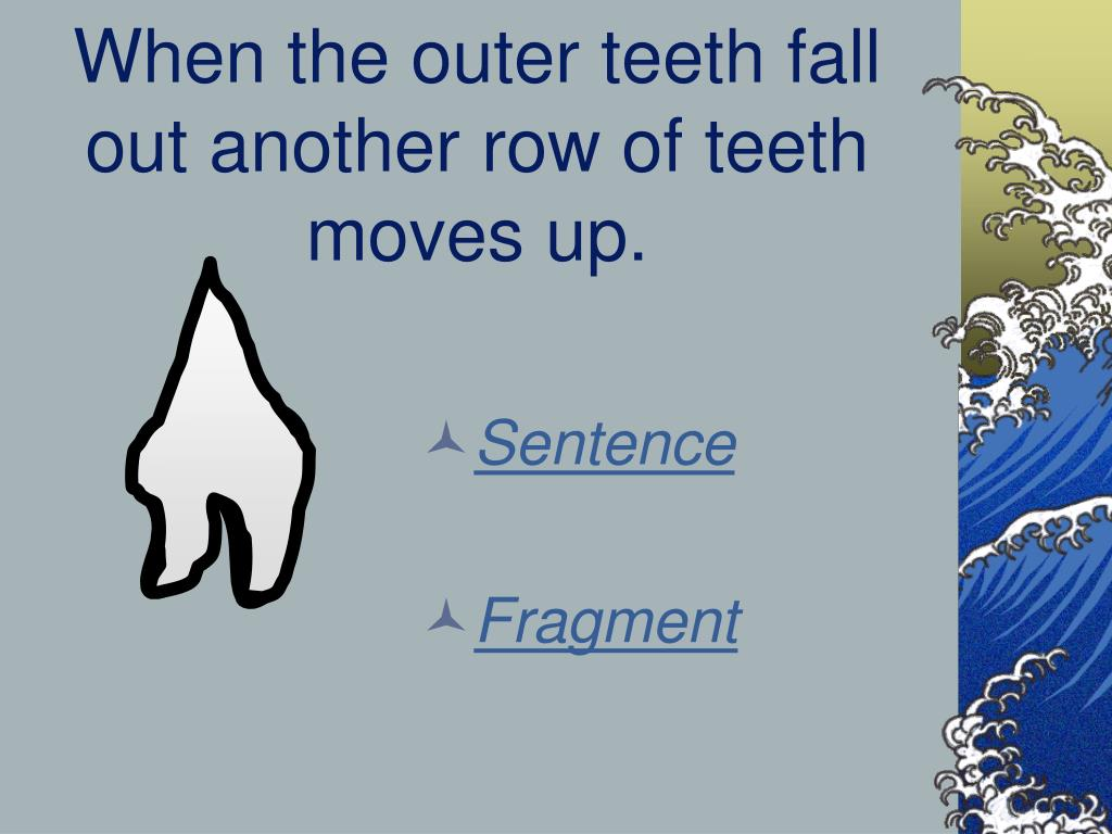 When the outer teeth fall out another row of teeth moves up.