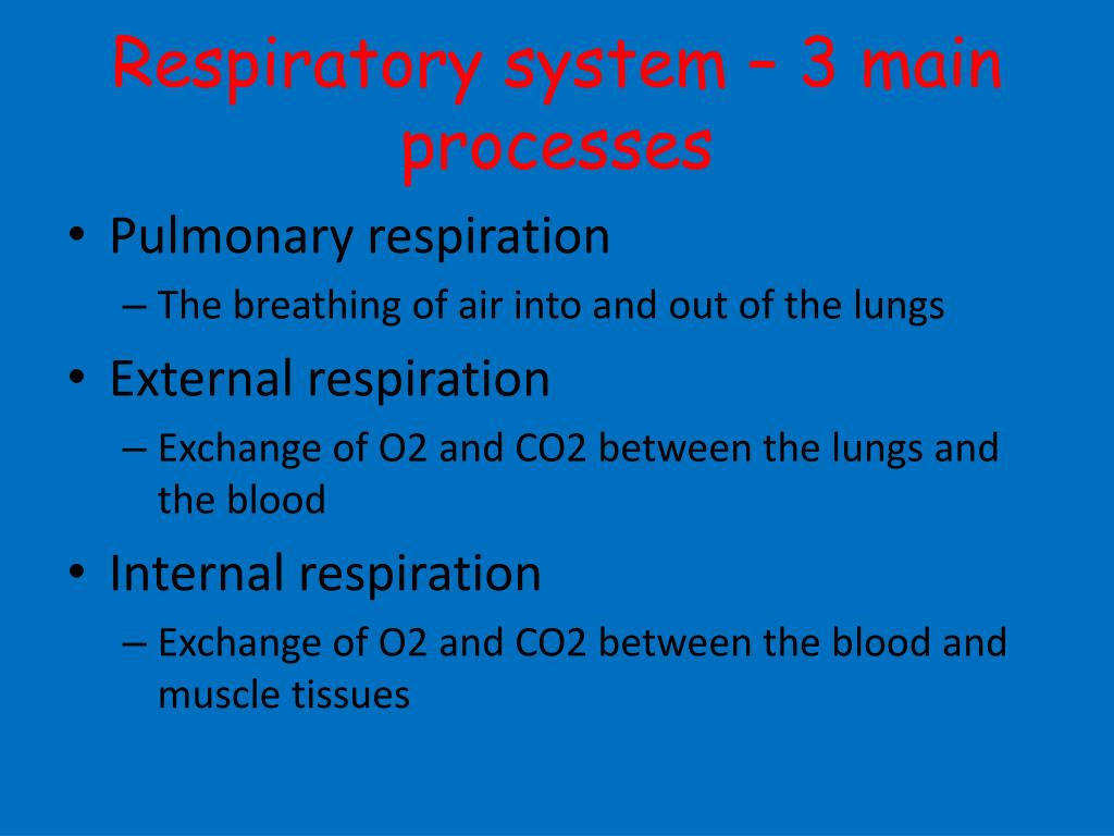 Respiratory system – 3 main processes
