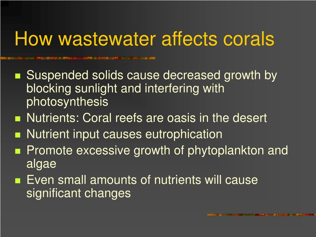 How wastewater affects corals