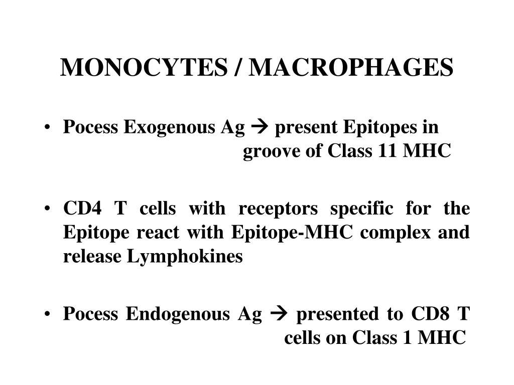 MONOCYTES / MACROPHAGES
