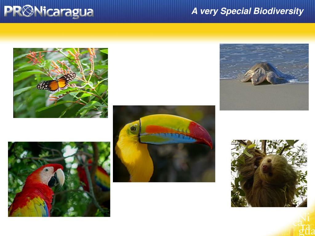 A very Special Biodiversity