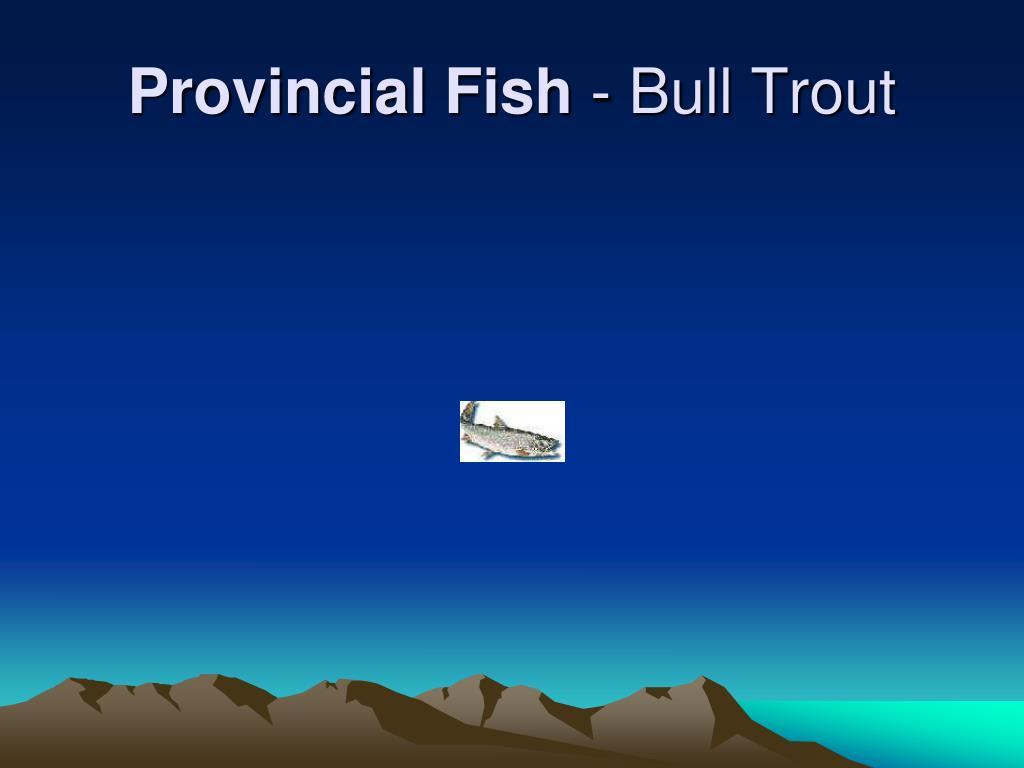 Provincial Fish