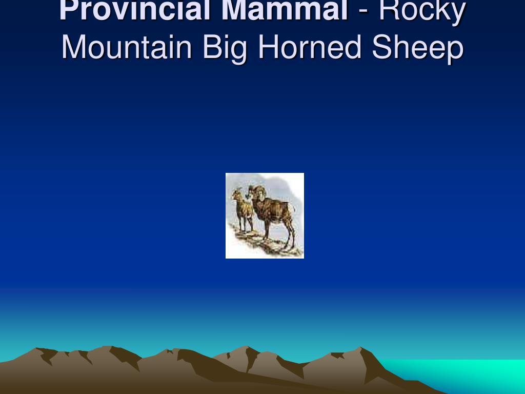Provincial Mammal