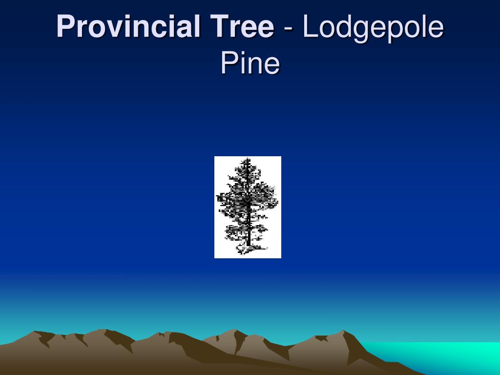 Provincial Tree