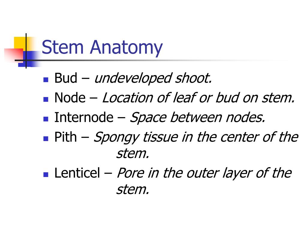 Stem Anatomy