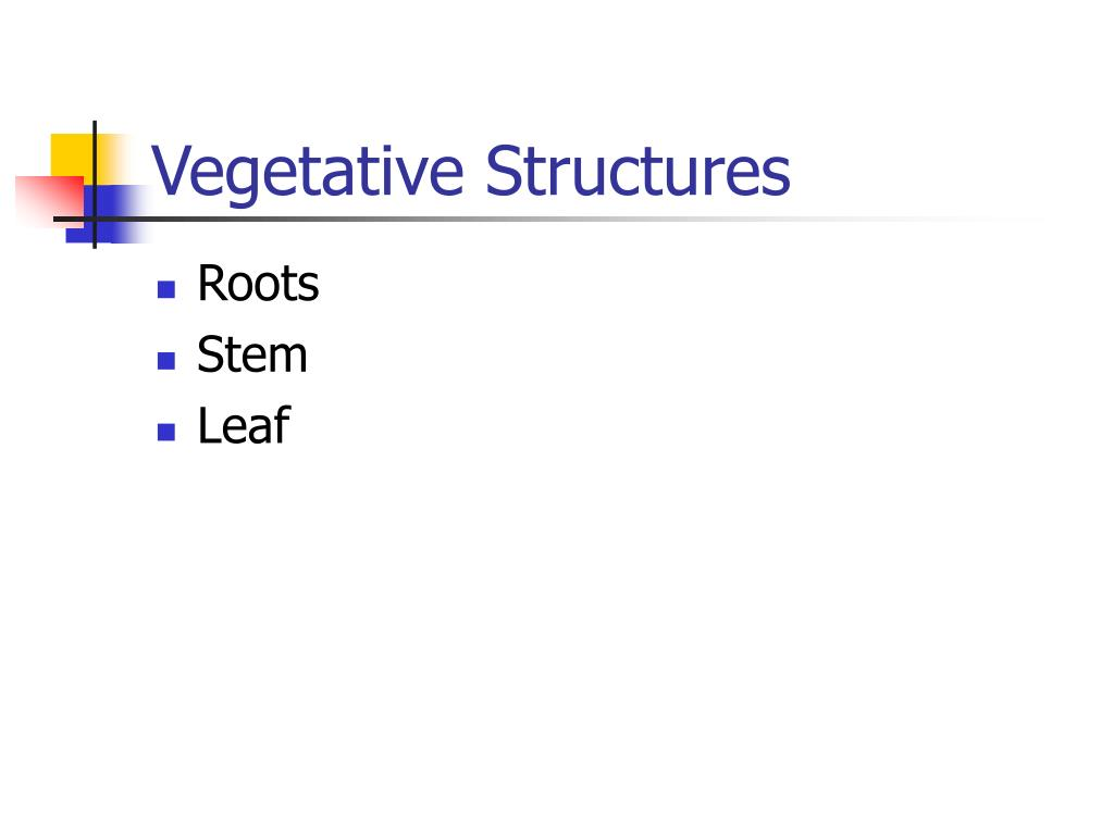 Vegetative Structures