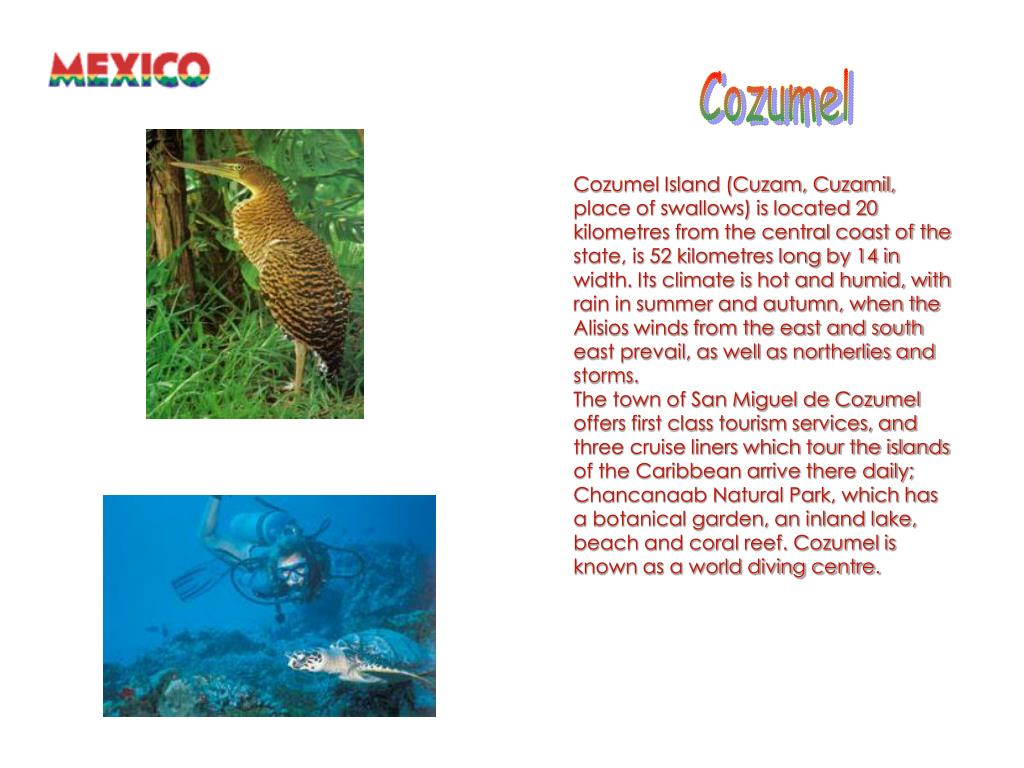 Cozumel Island (Cuzam, Cuzamil, place of swallows) is located 20 kilometres from the central coast of the state, is 52 kilometres long by 14 in width. Its climate is hot and humid, with rain in summer and autumn, when the Alisios winds from the east and south east prevail, as well as northerlies and storms.
