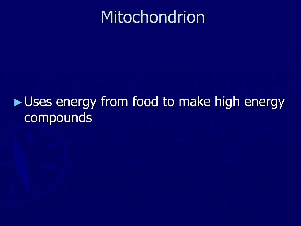 Uses Energy From The Sunlight To Make Energy Rich Food