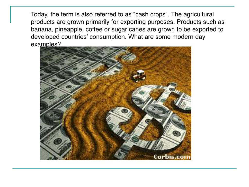 "Today, the term is also referred to as ""cash crops"". The agricultural products are grown primarily for exporting purposes. Products such as banana, pineapple, coffee or sugar canes are grown to be exported to developed countries' consumption. What are some modern day examples?"