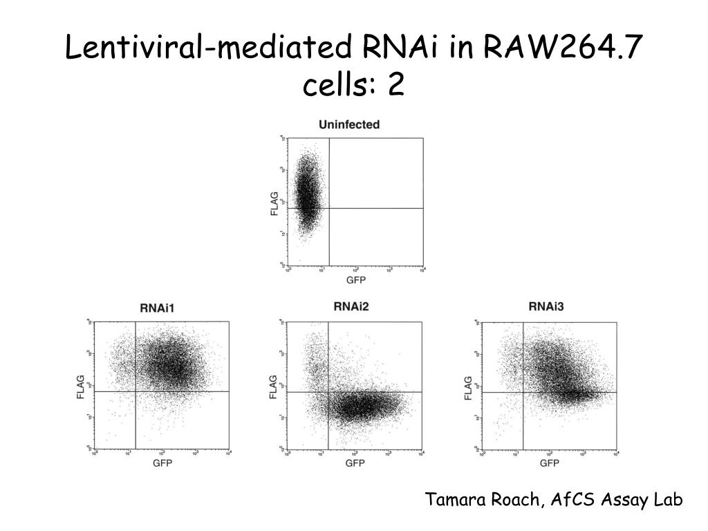 Lentiviral-mediated RNAi in RAW264.7 cells: 2
