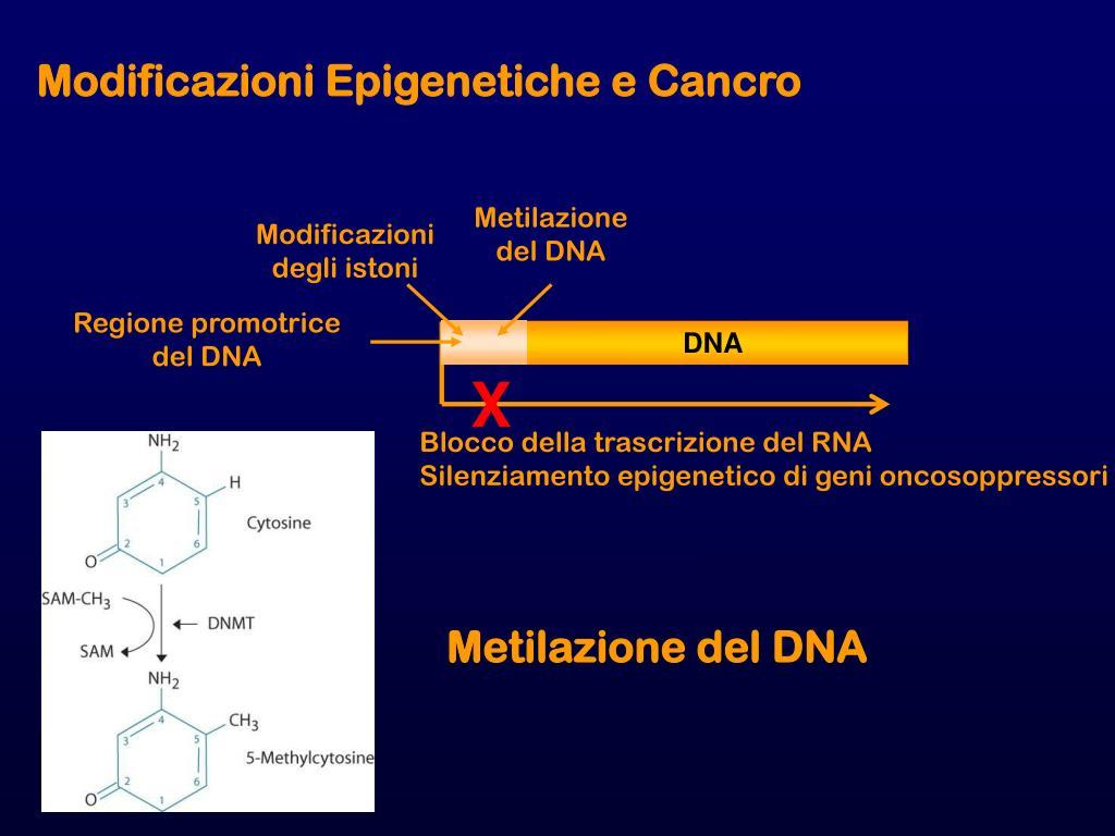 Modificazioni Epigenetiche e Cancro