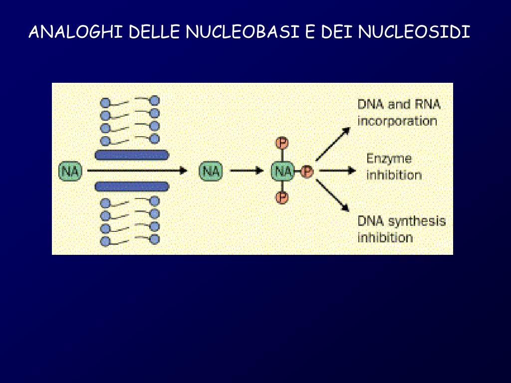 ANALOGHI DELLE NUCLEOBASI E DEI NUCLEOSIDI