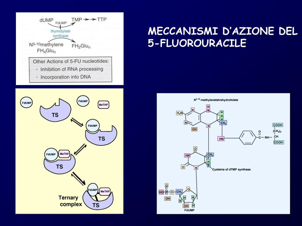 MECCANISMI D'AZIONE DEL 5-FLUOROURACILE