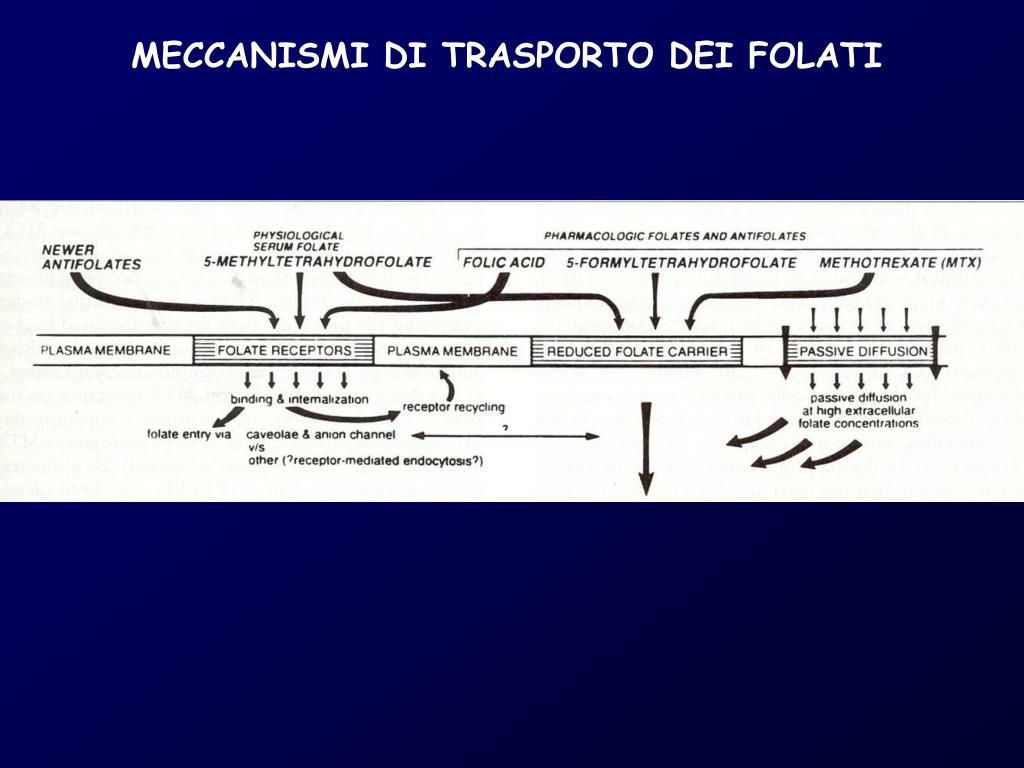 MECCANISMI DI TRASPORTO DEI FOLATI