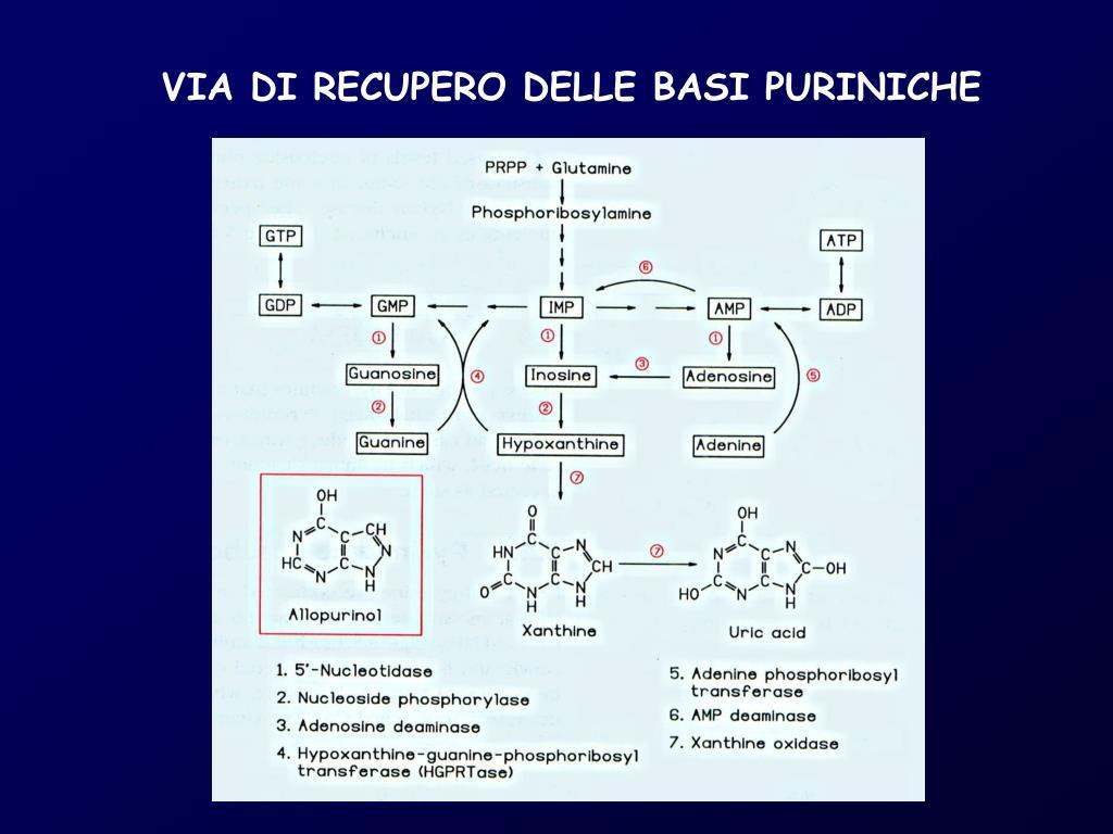 VIA DI RECUPERO DELLE BASI PURINICHE