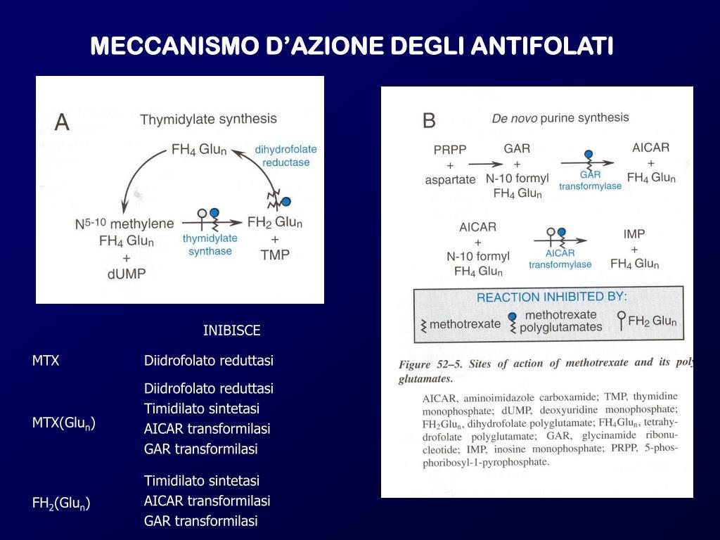MECCANISMO D'AZIONE DEGLI ANTIFOLATI