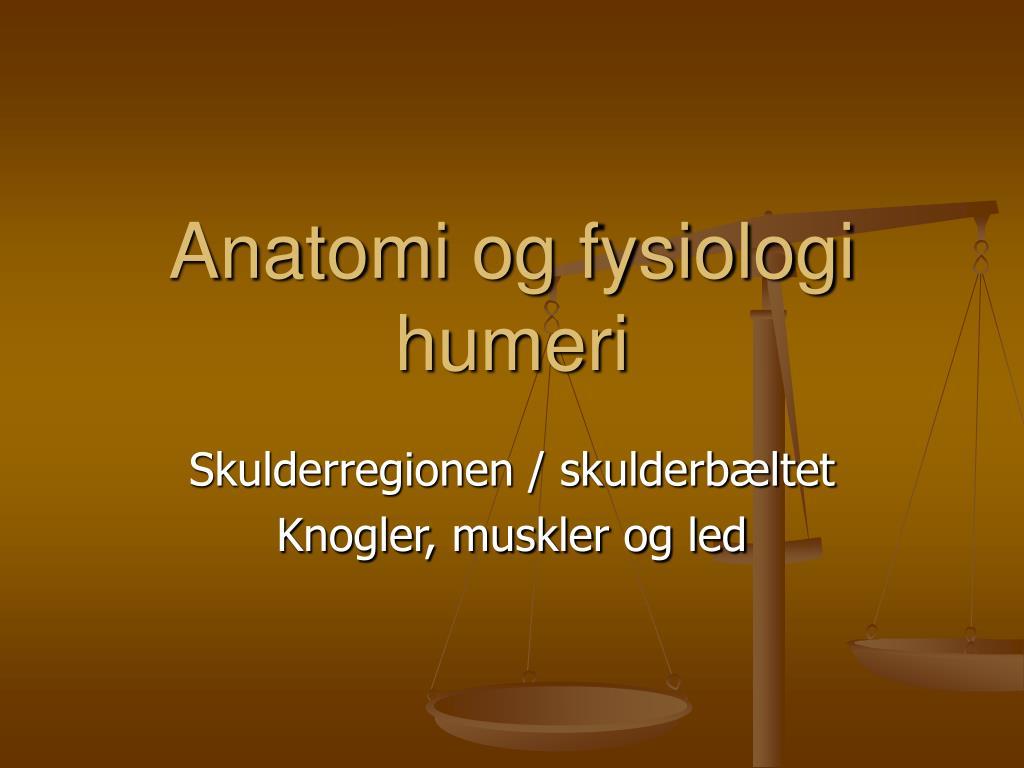 Anatomi og fysiologi humeri