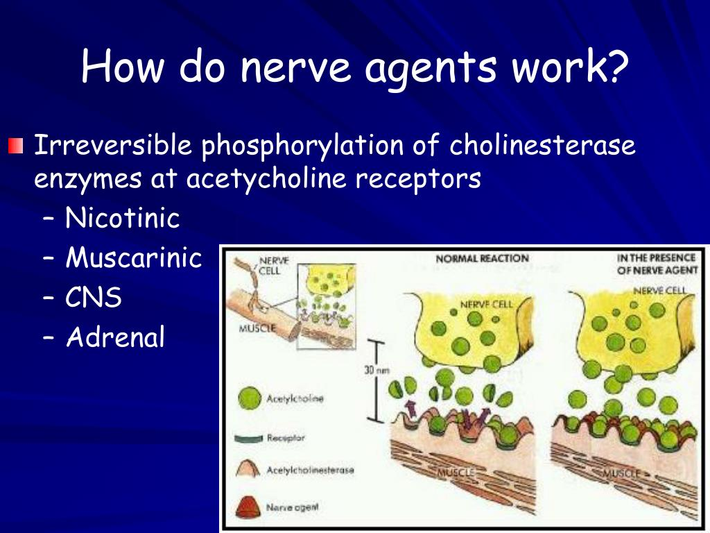 How do nerve agents work?