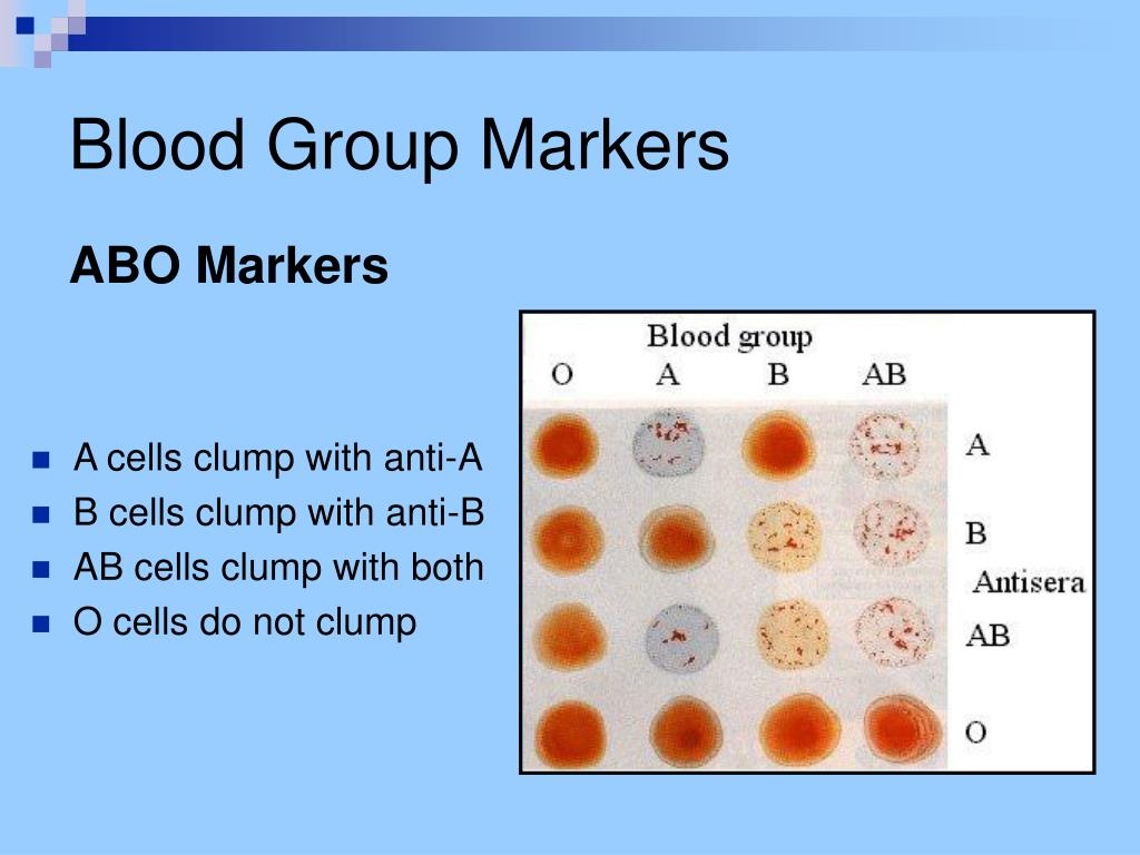 Blood Group Markers