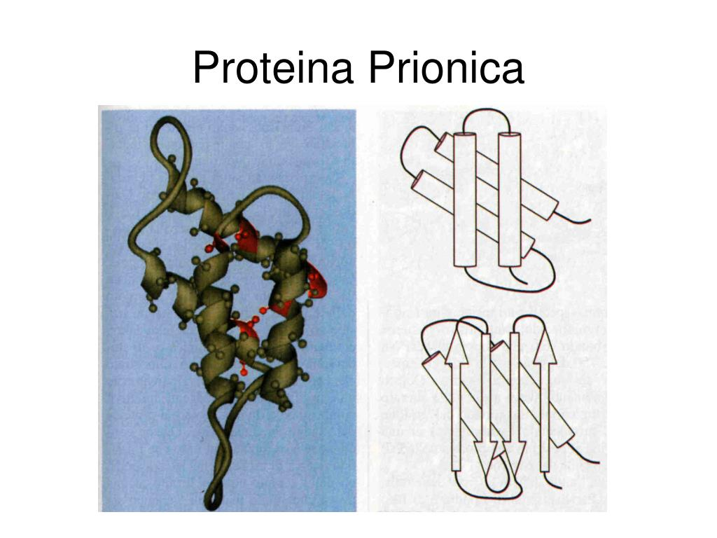 Proteina Prionica
