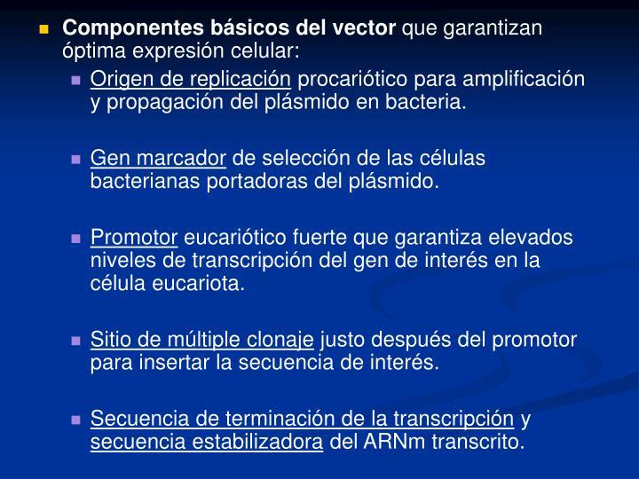 Componentes básicos del vector