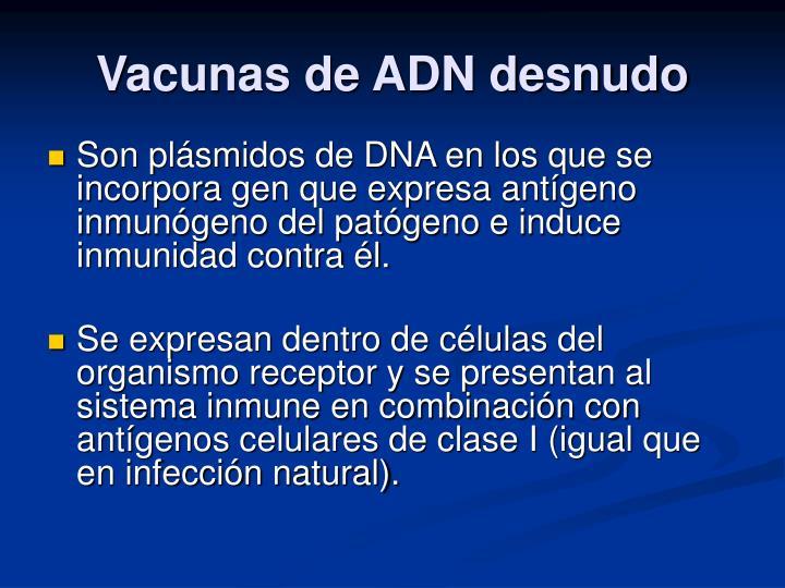 Vacunas de ADN desnudo