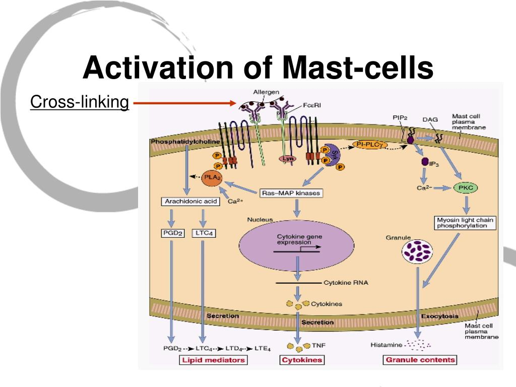 Activation of Mast-cells