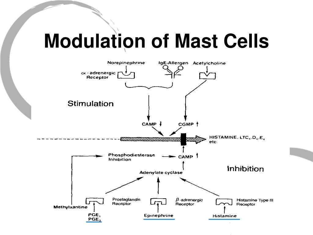 Modulation of Mast Cells