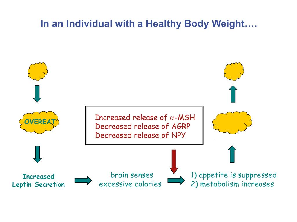 In an Individual with a Healthy Body Weight….