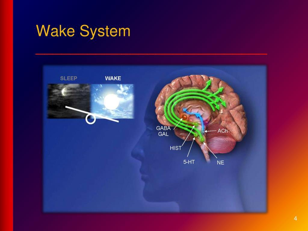 Wake System