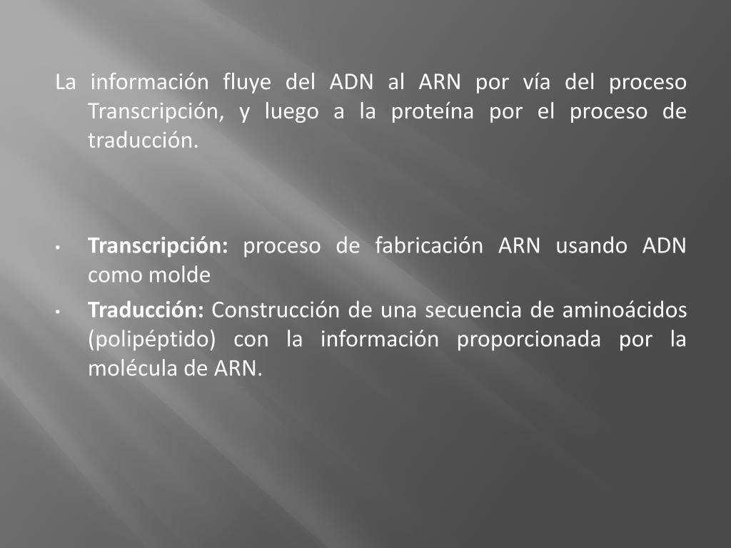 La información fluye del ADN al ARN por vía del proceso Transcripción, y luego a la proteína por el proceso de traducción.