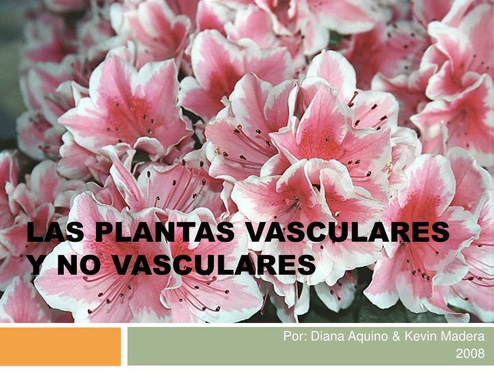 PPT  LAS PLANTAS VASCULARES Y NO VASCULARES PowerPoint Presentation