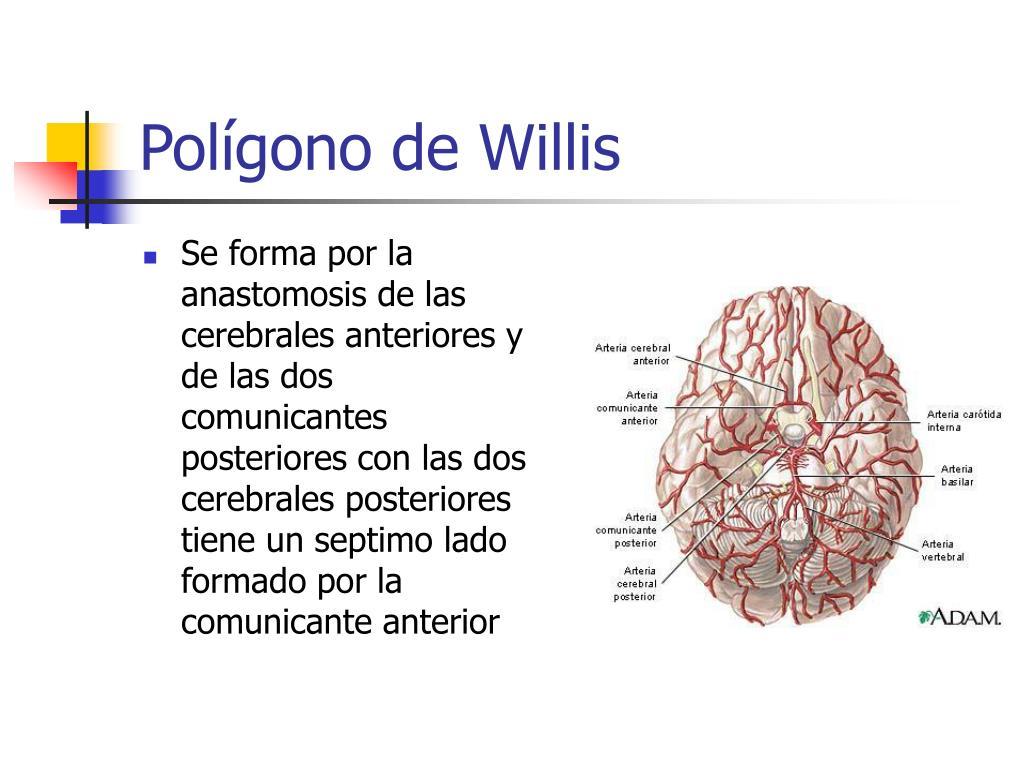 Polígono de Willis