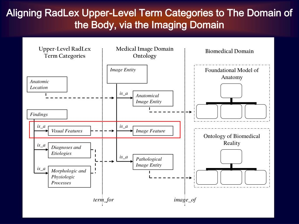 Aligning RadLex Upper-Level Term Categories to The Domain of the Body, via the Imaging Domain