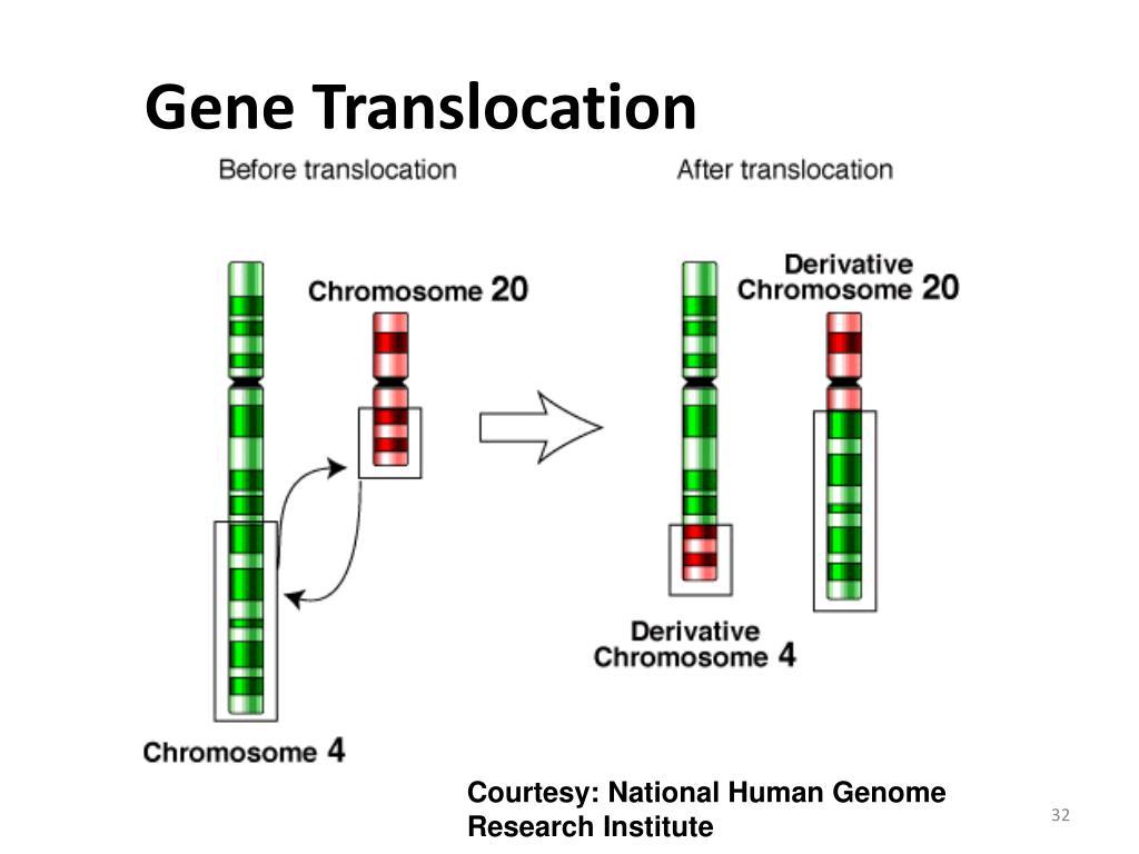 Gene Translocation