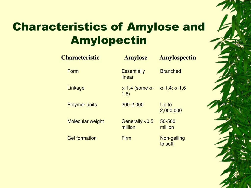 High Amylopectin Foods