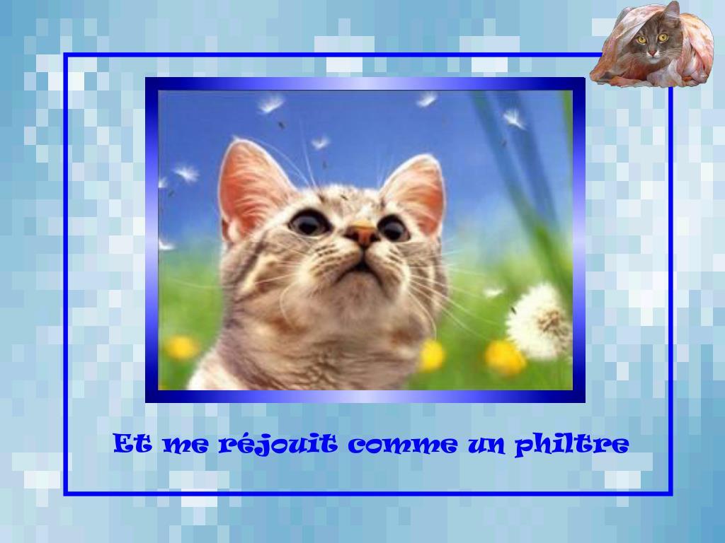 ppshuguette