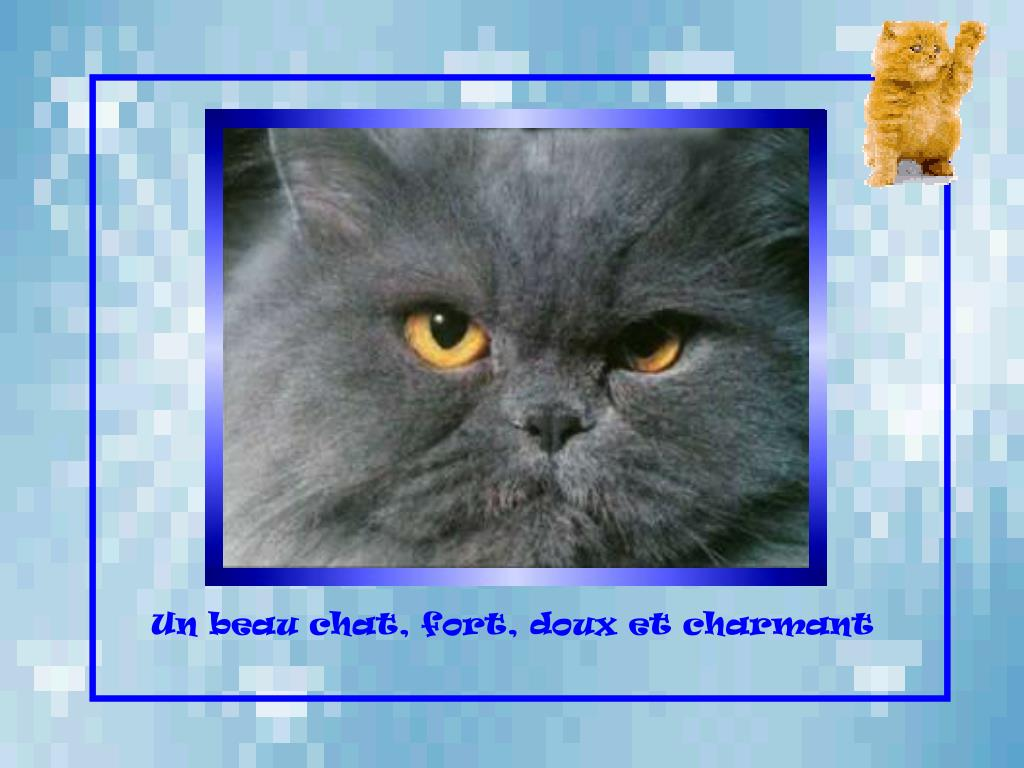 Un beau chat, fort, doux et charmant