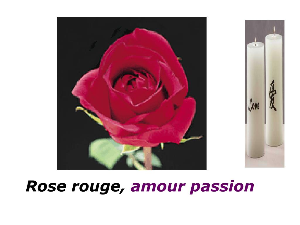Rose rouge,