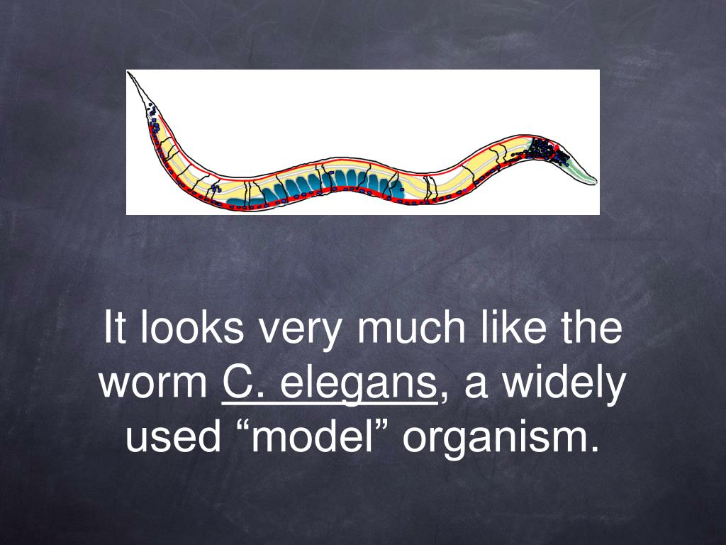 It looks very much like the worm